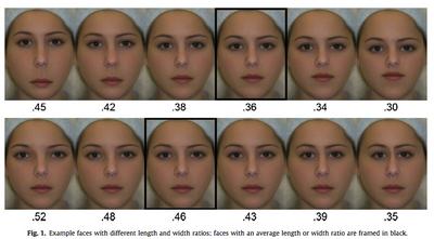 美しい顔の比率.jpg